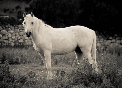 Horse #Barna #Cobh #Connemara #Cork #Dublin #Galway #Ireland #Irlandia #Podróże #Spidal
