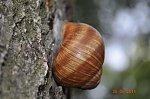 images45.fotosik.pl/1144/0c9d00664106e6c2m.jpg