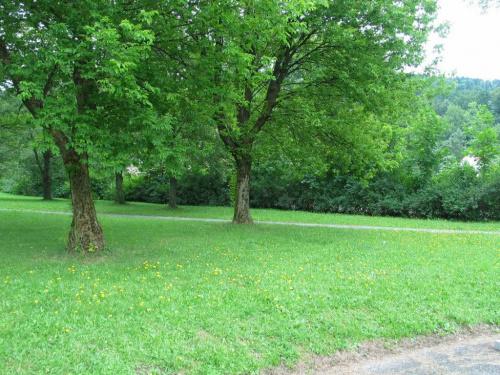 W Ustroniu :-) #drzewa #trawa
