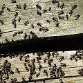 mrówki #mrówki #owady #przyroda