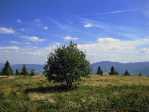 Rachowiec (954 m.n.p.m.) #Beskidy #BeskidŻywiecki #WorekRaczański #Rachowiec