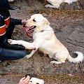 Ghandi ze schroniska w Józefowie #adopcja #józefów #pies #przygarnij #psiak #schronisko