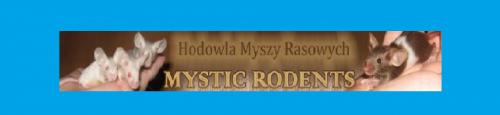 HODOWLA MYSZY RASOWYCH MYSTIC RODENTS