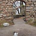 I skończyły się darmowe wejścia na zamek Bolczów,nowy kasztelan potrafi o to zadbać :) #Bolczów #jesień #kot #RudawyJanowickie #ruiny