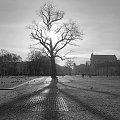 #przyroda #drzewo #slonce #miasto #ranek #dzien