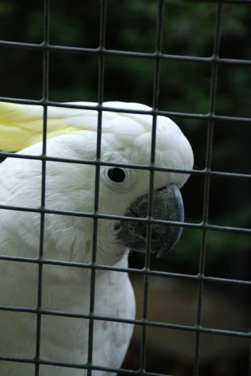 chyba kakadu...bardzo ciekawska #ptaki
