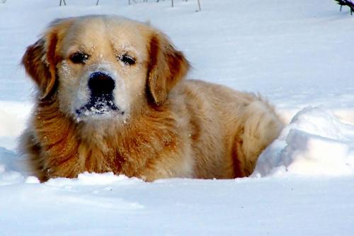 psia zima