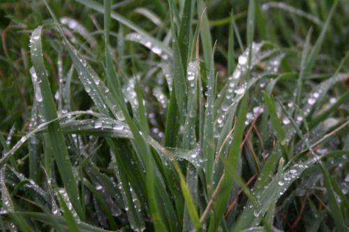 #deszcz #trawa