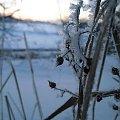mróz #zima #mróz