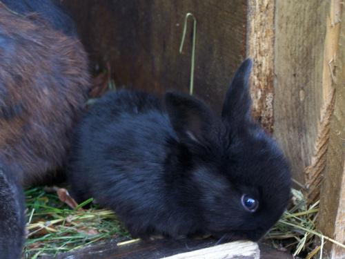 Młody króilk #lato #zwierzęta #owad #królik #przyroda