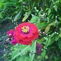 kwiat roślina #wiosna #kwiat #roślina