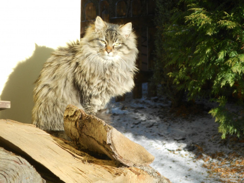 Zima 2012, robione w okolicy domu #zima