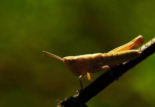 #łąka #lato #owad #KonikPolny