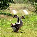 zycie na wsi #lato #przyroda #wakacje #wies
