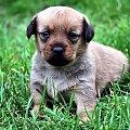 #dog #szczeniak