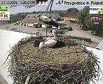 http://images45.fotosik.pl/161/9e2476c010178d1am.jpg