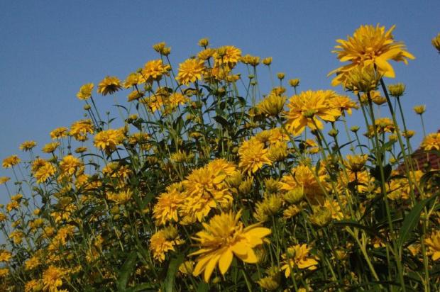 #natura #kwiaty #niebo