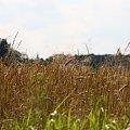 #Bralin #lato #łąki #kwiaty #zboże #owady