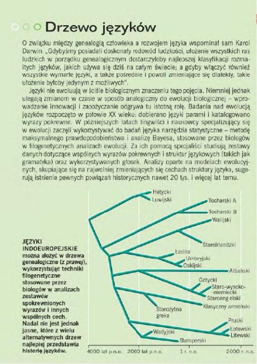 """naukowe podejście i przedstawienie """"rozwoju"""" w formie drzew"""
