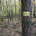 Żółtym do Ostromecka (Unisław) #rajd #drzewa #przyroda #szlak