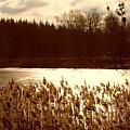 w słoncu #staw #trawy #slonce