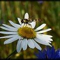 #owad #trawa #foto #artystyczne