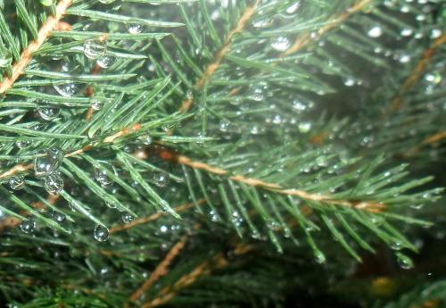 Zdjęcie konkursowe #przyroda #natura #rośliny #drzewa #las #lasy #deszcz