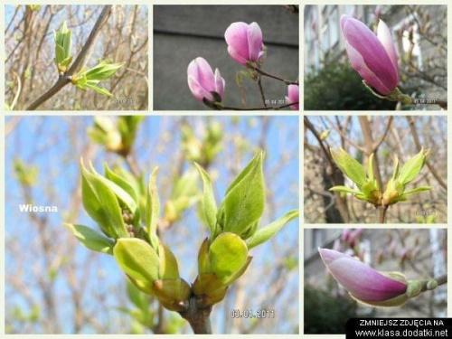 Wiosenny kolaż