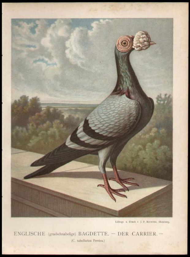 Karier 1887 r.