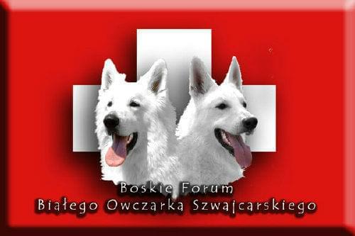 Chłodny Psy w potrzebie - BIAŁY OWCZAREK WG78