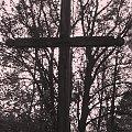 Krzyż leśny #Puszcza #jesień