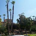 Lubie bardzo palmy ;] #cypr #egzotyka #lato #Palma #wakacje