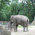#słoń #zoo #łódzkie