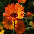 #kwiaty #roza #olympus #przyroda #piotrkow #PiotrkowTryb