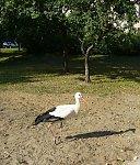 http://images45.fotosik.pl/200/f62c6736fc829cc5m.jpg