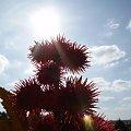 #ciepło #dojrzewanie #drzewka #działka #kwiatki #lato #macro #natura #ogór #ogórek #ogrod #ogród #ogródek #owoce #OwoceNatury #piękno #plony #roslinnosc #roslinność #rosliny #rozkwit #wieś #wioska #wiosna #woda #zbiory