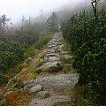 górska ścieżka #góry #Karkonosze #SzklarskaPoręba #Szrenica #szlak #ścieżka