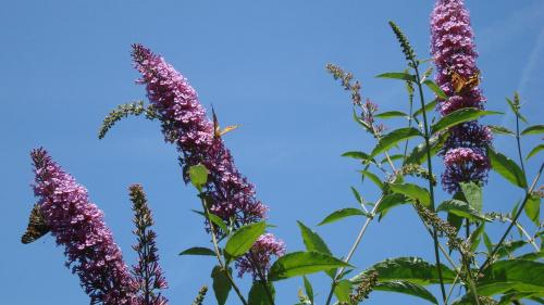 A na razie fruwają motyle ...