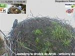 http://images45.fotosik.pl/228/adad485c426fb644m.jpg