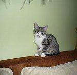 http://images45.fotosik.pl/232/52ed14761b5724bcm.jpg