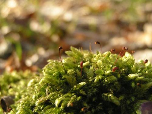 roślinność Beskidu Niskiego