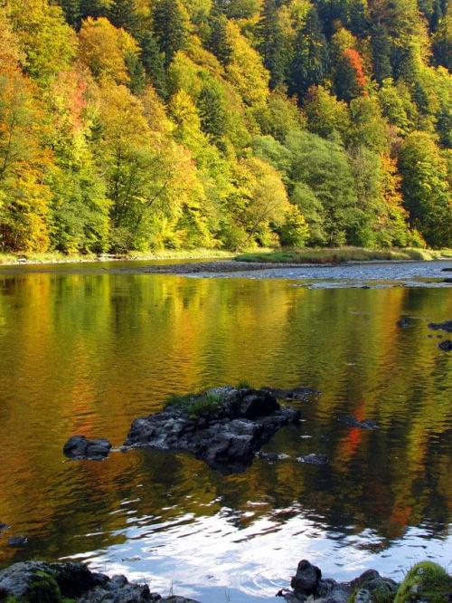 jesienny Dunajec