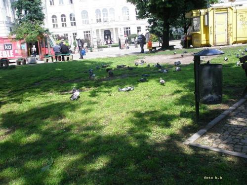 Piotrków Trybunalski park im. Jana Pawła II #miasto #PiotrkówTrybunalski #park