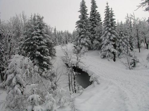 Żółtym szlakiem ze schroniska Pod Łabskim Sczytem_2 #Karkonosze #góry #zima #śnieg #las