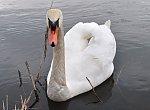 images45.fotosik.pl/274/bd2ab4e476bff720m.jpg