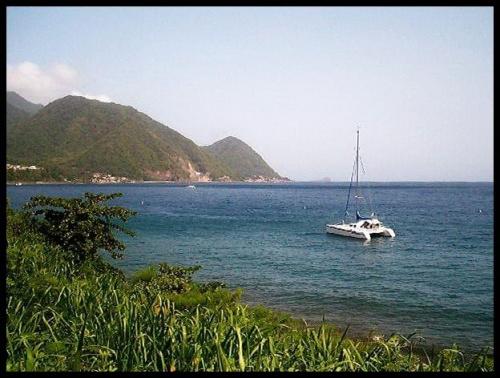 Karaibik / Dominica / Roseau #Wyspy #Dominica #Roseau #katamaran #woda