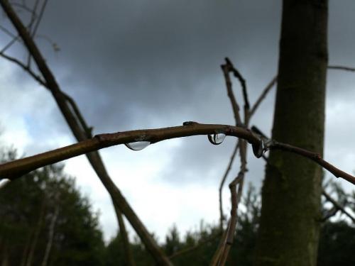 wierzba płacząca #deszcz #chmury #PoDeszczu #wiosna #kropelki #kropelka