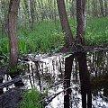Puszcza Kampinoska-kolejna kąpiel :D #PuszczaKampinoska #błoto #UroczyskoKalisko