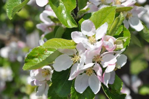 #przyroda #kwiaty #ogródki