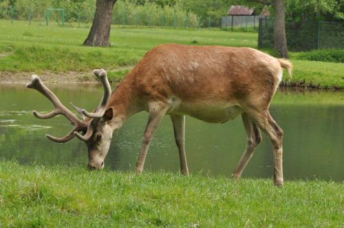 Jaka dobra trawka....! #przyroda #zwierzęta #zoo